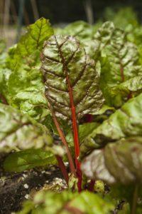 toxic organic gardening